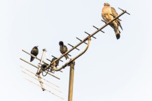 birds-sitting-on-antennas